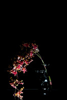 OnBlack_Red Orchid